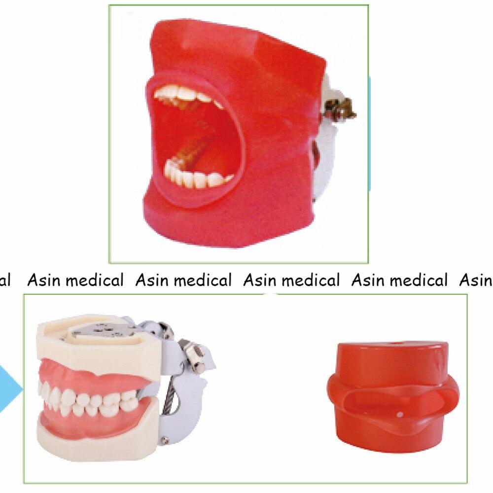 Sistema di Pratica di alta Qualità Simulazione Orale Dentale Phantom Testa per la Scuola Dentale
