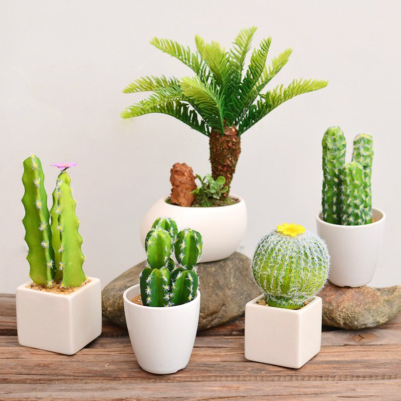 petit cactus pot. Black Bedroom Furniture Sets. Home Design Ideas