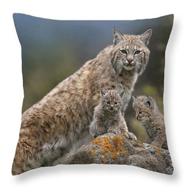 DLXJBZT002F20bobcat-mother-and-kittens-north-america-tim-fitzharris