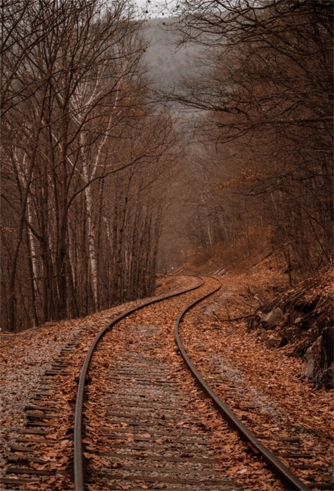 Laeacco Forest Railway Defoliation Winter Photography Backgrounds Thin Vinyl Customized Photographic Backdrops For Photo Studio