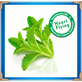 Stevia sementes 200 pcs Stevia ervas sementes verdes Herb rebaudiana Semillas doce folha crisântemo para casa jardim planta sementes