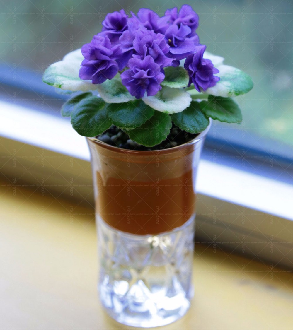 african violet flower promotion-shop for promotional african