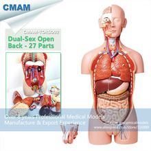 CMAM TORSO02 Medical Dual Sex 85cm 27 parts Torso Model with Opened Back Human Anatomy Model