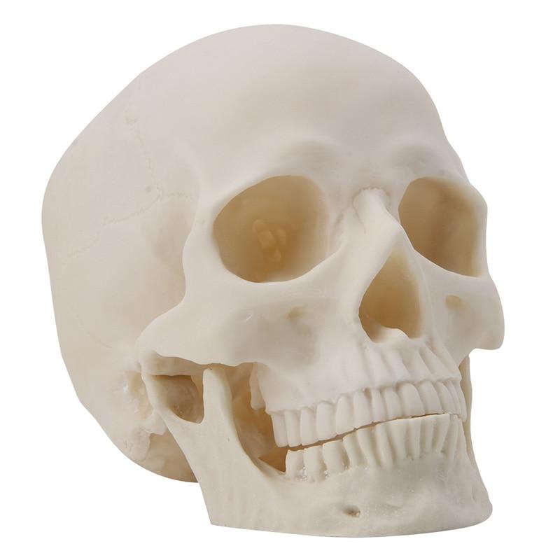 Resin Art Human Skull Replica Teaching Model Medical Realistic 1:1 Adult Size reusable full titanium steel medical adult anaesthetic laryngoscope medical teaching