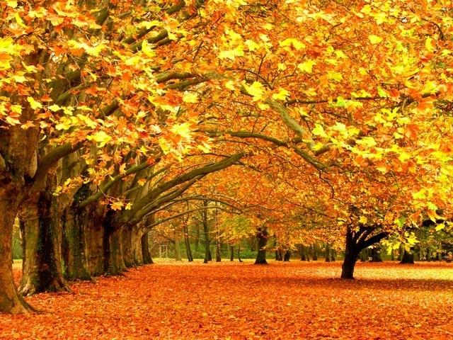 autumn golden leaves fall scenery shine diamond decorative painting