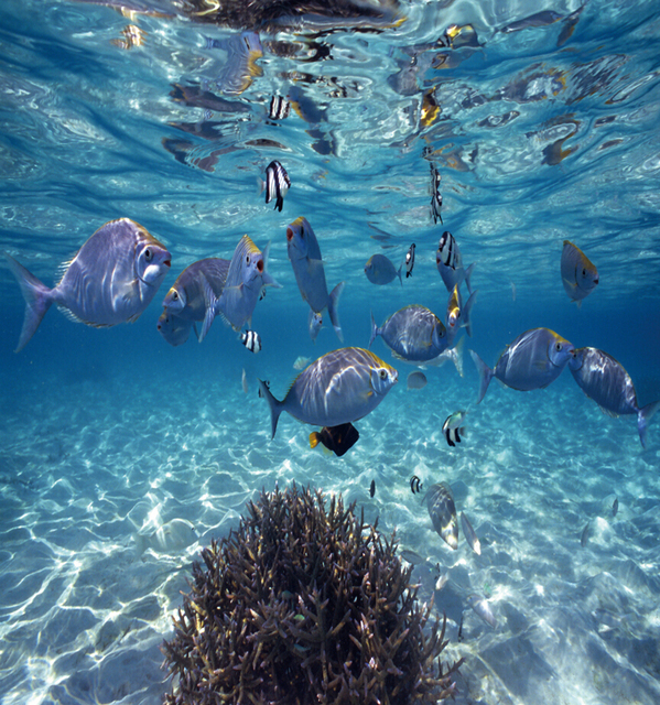 Deep Sea Fish Photo Wallpaper 3d Wall Paper Fototapete 3d Mural