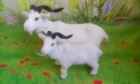 simulation sheep model,polyethylene&furs white goat toy,prop,home decoration Xmas gift w4225