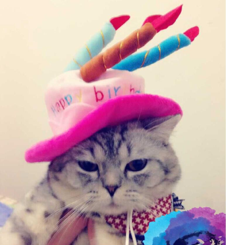 Happy Birthday Cat Caps Cute Pet Hat Custome Cosplay For