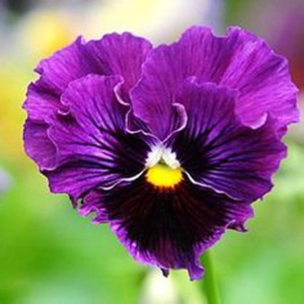 Popular Purple Color Combinations Buy Cheap Purple Color