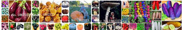 100 szt Hiacynt bonsai wieloletnie Hyacinth roślina doniczkowa Indoor roślina Easy rosną w doniczkach kwiat roślin Bonsai dla domu ogród tanie i dobre opinie Bardzo proste Roczne Wykluczone Nowa roślina Upiększających Mini średni duży mały Wiosna Virgo Subtropikalnych