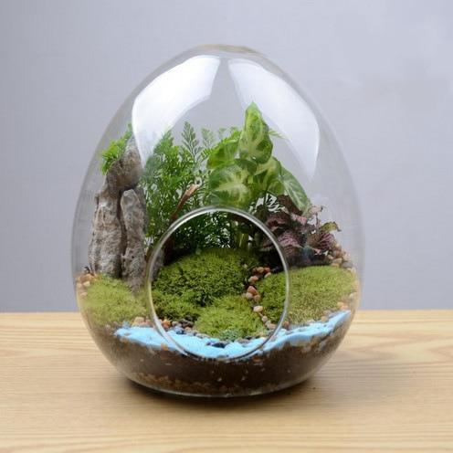 Egg shaped glass bottle succulents glass vase micro for Glasvase bepflanzen