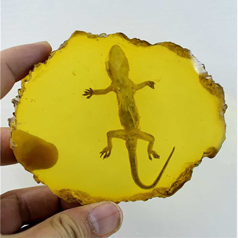 Atas!-Kuning Amber Gecko Amber Ornamen untuk Real Serangga Spesimen