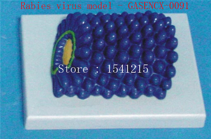 Virus structure model Biological teaching model Medical teaching aids Rabies virus model - GASENCX-0091 shunzaor dog ear lesion anatomical model animal model animal veterinary science medical teaching aids medical research model