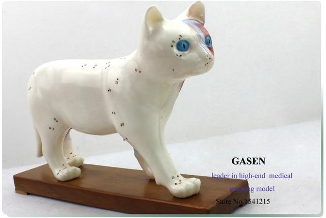 MEDICAL CAT ANATOMY MODEL CAT ACUPUNCTURE MODEL ANIMAL VETERINARY ...