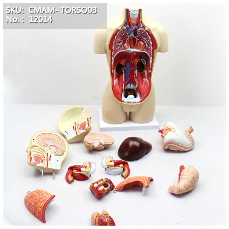 CMAM/12014 torse, 45 cm, bisexuels, 16 parties, modèle anatomique d'enseignement du corps humain en plastique