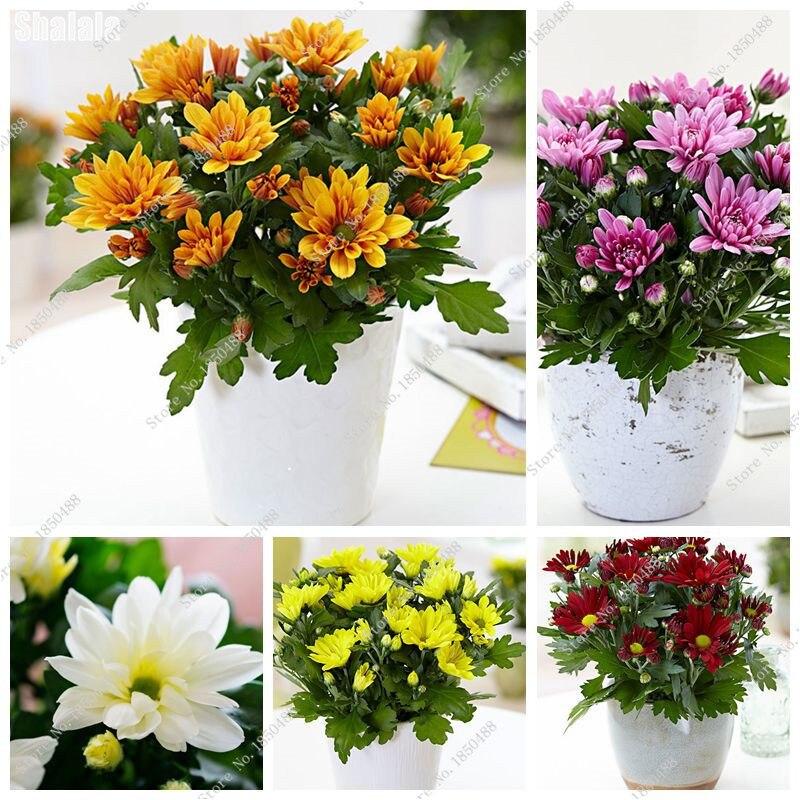 Plantas para macetas exterior resistentes planos planta for Plantas decorativas resistentes