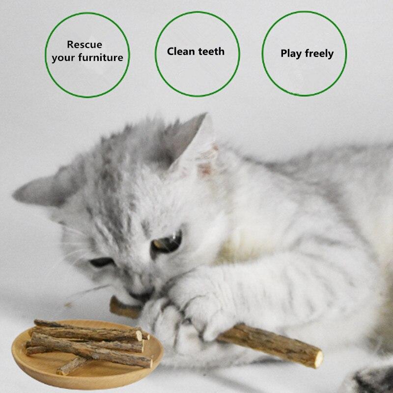 5 пакет кошка коренной зуб Тематические товары про рептилий и земноводных stick натурального дерева дней polygonum котенок Товары для кошек кошка ...
