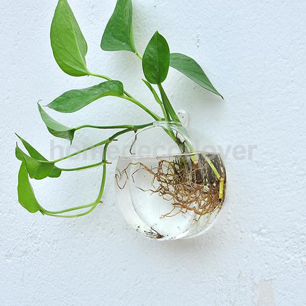 Wall hanging plant flower hydroponic flat ball glass vase aeproducttsubject reviewsmspy