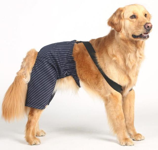 Large dogs British style cool strip jumpsuit costume big dogs ...