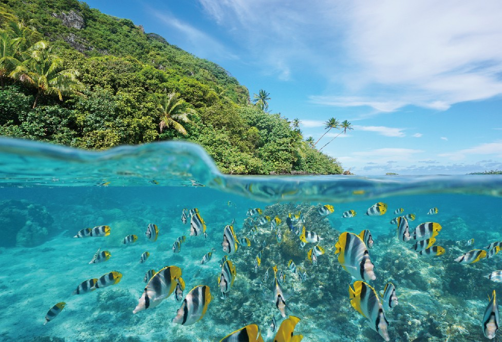 Laeacco Tropical Island Underwater Fish Coral Tree Baby Cloud Photo Background Customized Photography Backdrops For Photo Studio