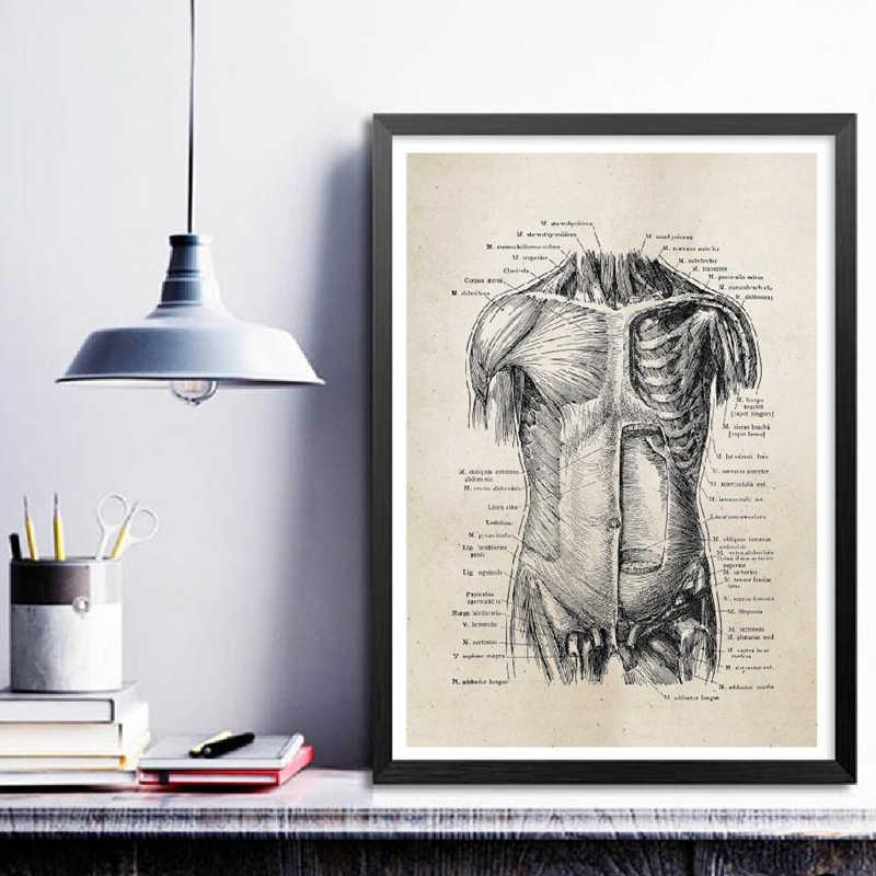 Анатомия человека, холст, художественные принты и постер, ретро анатомический плакат, Картина на холсте, Настенная картина, медицинский доктор клиника, Декор