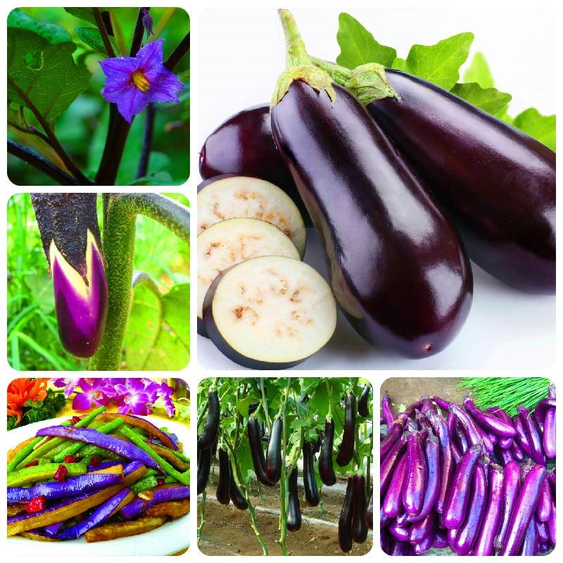 selling organic vegetable 100seed basil color eggplant seeds