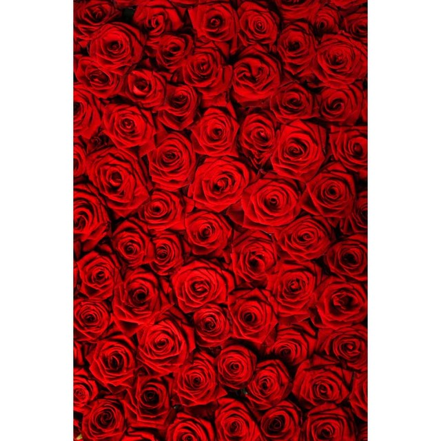 Vinyl Cloth Red Rose Flowers Wallpaper Photography Backdrops For