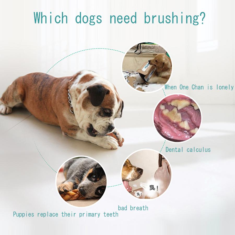 Cepillo de dientes para perros resistente a la mordedura 4