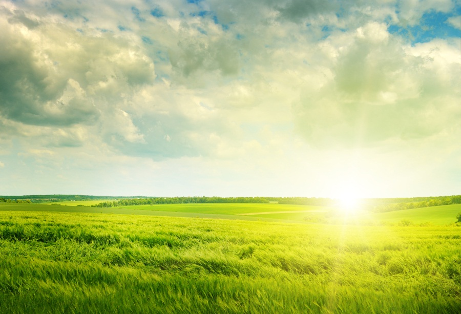 Laeacco Spring Green Field Clouds Sunlight Scenic Photography Background Customized Photographic Backdrop For Photo Studio