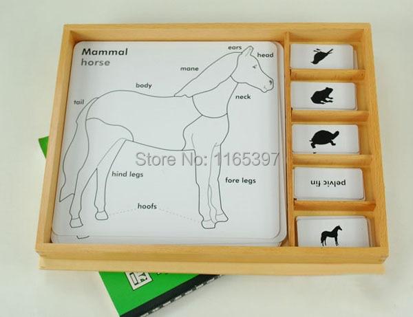Livraison gratuite 1 Set enfants en bois nouveau Montessori animal partie apprentissage puzzle début activité éducative matériel