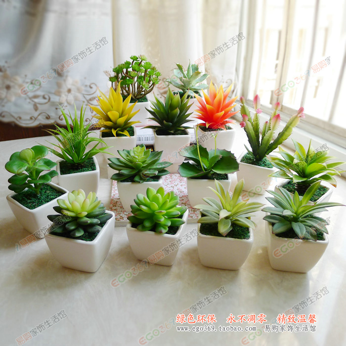 Small Plants For Desk House Beautiful