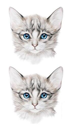 Download 66+  Gambar Kucing Kartun Lucu Paling Imut