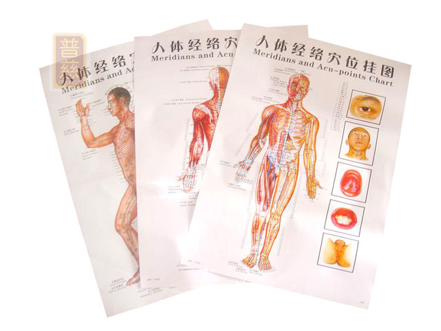 Online Shop Clear side wall map the human body chart meridian points ...
