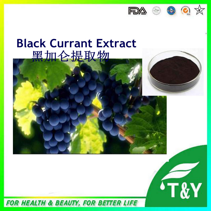 Hot selling 2016 New Certified Black Currant Extract, Organic Freeze Dried Black Currant Powder 800g/lot bl fp230a sp 83r01g 001 replacement projector bare lamp for optoma dx608 ep747 ep7475 ep7477 ep7479