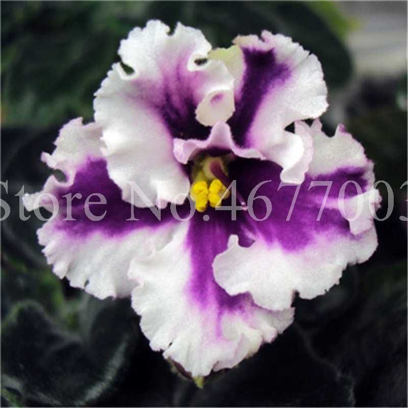 150 pcs/ bag Indoor Violet Flower Potted Plant Exotic Bonsai 100% True Blooming Flore Plant for Home Garden Flower Pot Easy Grow