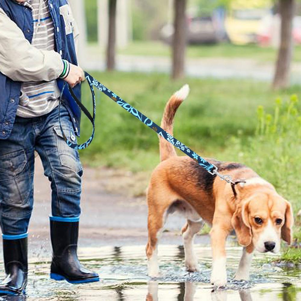 Собака на поводке картинки