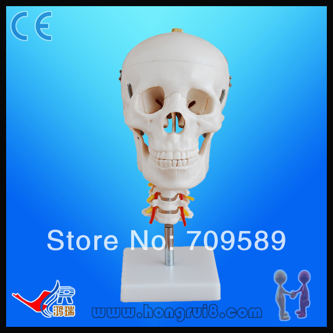 Plastic Skull with Cervical spinePlastic Skull with Cervical spine