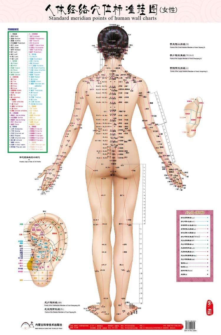 Fein Intern Weiblich Fortpflanzungs Anatomie Diagramm Bilder ...