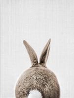 Rabbit Tail-15