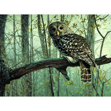 Owl in Green Forest Hand Made Paint High Quality Canvas Beautiful Painting By Numbers Surprise Gift Great Accomplishment(China)