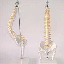 Модель позвоночника для взрослых, 45 см, 1:1, гибкий Поясничный изгиб, модель скелета человека, с диском позвоночника, модель таза, используемая для массажа, йоги и т. Д.
