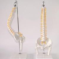45cm 1:1 Adult Flexible Lumbar Bend Spine Model Humans Skeleton Model with Spinal Disc Pelvis Model Used for Massage ,yoga Etc.