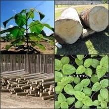 200pcs High Quality paulownia elongata New forest tree bonsais,200pcs/pack fast growing Bonsai Plant for Home garden