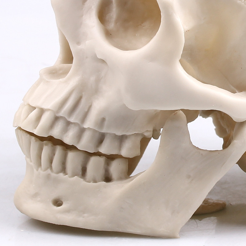 Cranio Humano em Resina tamanho real