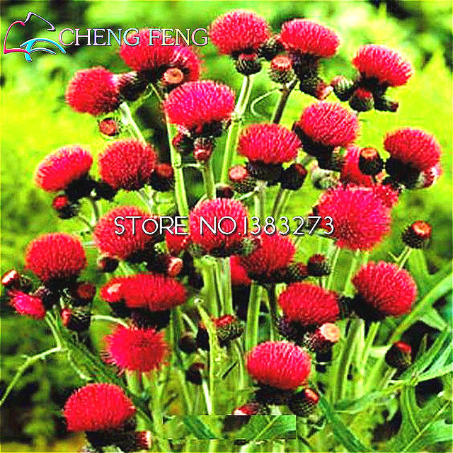 Aliexpress Buy 2016 Sale 100pcs Outdoor Garden Rare Flowers – Rare Garden Plants