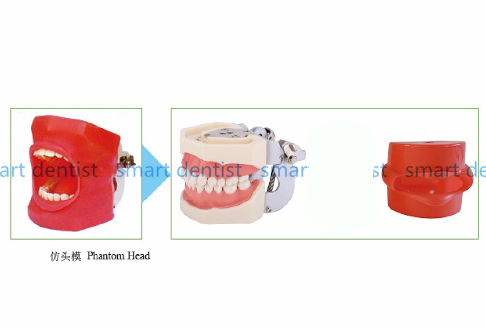 Good Quality Oral Simulation Practice System Dental Phantom Head for Dental School - 2