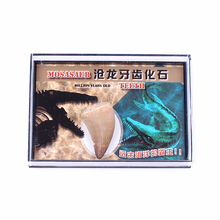 1PC Fossil Mosasaurus Mineral Specimen Tooth Dinosaur Model Collectibles Teaching Halloween Decor