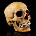 Life-Size Human Skull Orange Simulation 1: 1 Model of Medicine Skeleton Gothic Decoration Halloween Party Scene Layout Present
