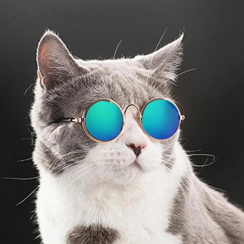 Cool Cat Eye Wear Pet Sunglasses Little Dog Glasses Cat Glasses Photos Props Dog Cat Accessories Pet Supplies For Pet Product 30 Dog Accessories Aliexpress