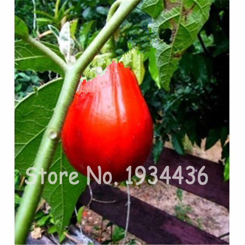 200 Pcs Heirloom Red Eggplant Plant Organic Non-GMO Fruit Vegetable Bonsai Flower Potted For Home Garden Natural Growth Grove